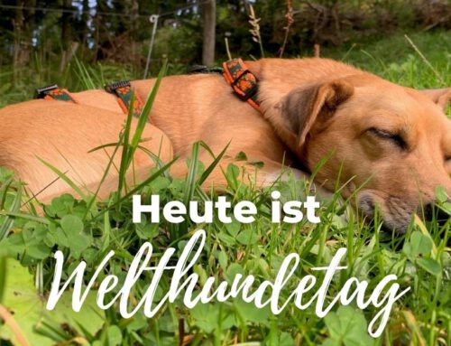 Heute ist Welthundetag!